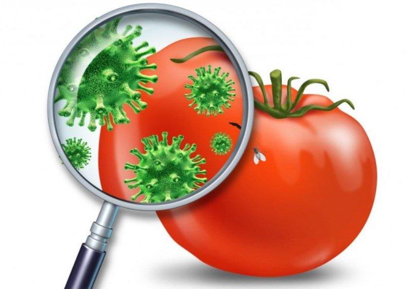 О профилактике острых кишечных инфекций в летний период
