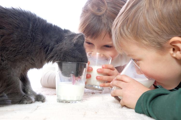 дети и кот пьют молоко