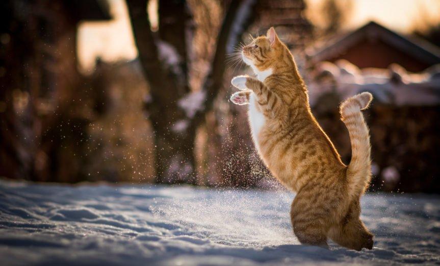 рыжий кот зимой