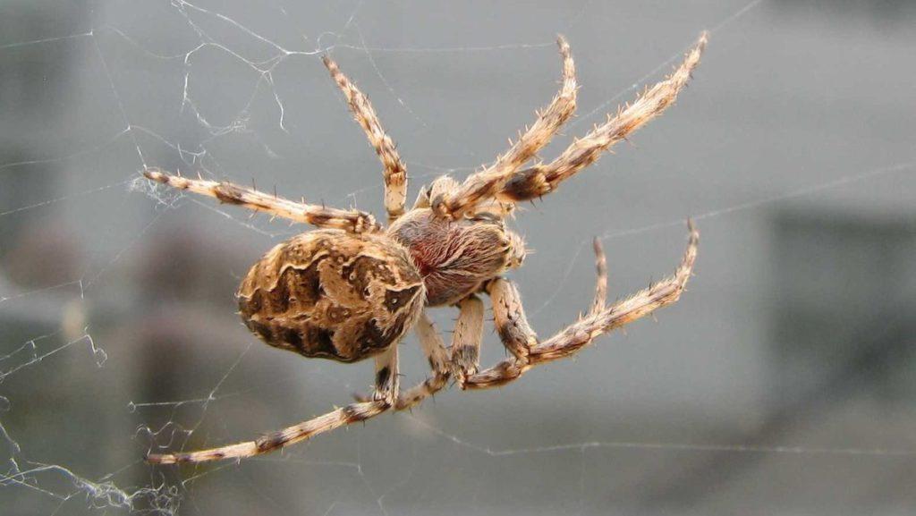 убивать пауков