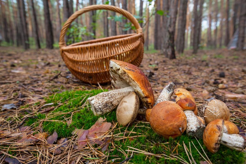 В лесу Омутнинского р-на найдено тело мужчины, на которого мог напасть дикий зверь
