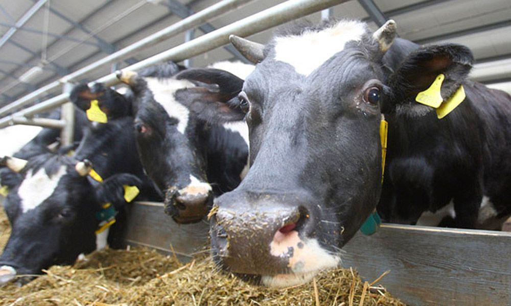 молочно-товарных ферм