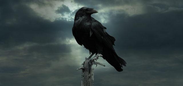 Ворон - одна из загадочных птиц. Что мы не знали о них