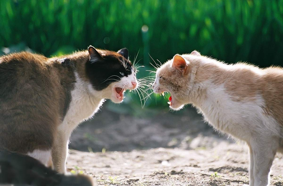 Кошки — как люди! Ученые выделили 6 типов кошачьей личности