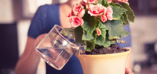 Удобрения для комнатных растений по народным рецептам