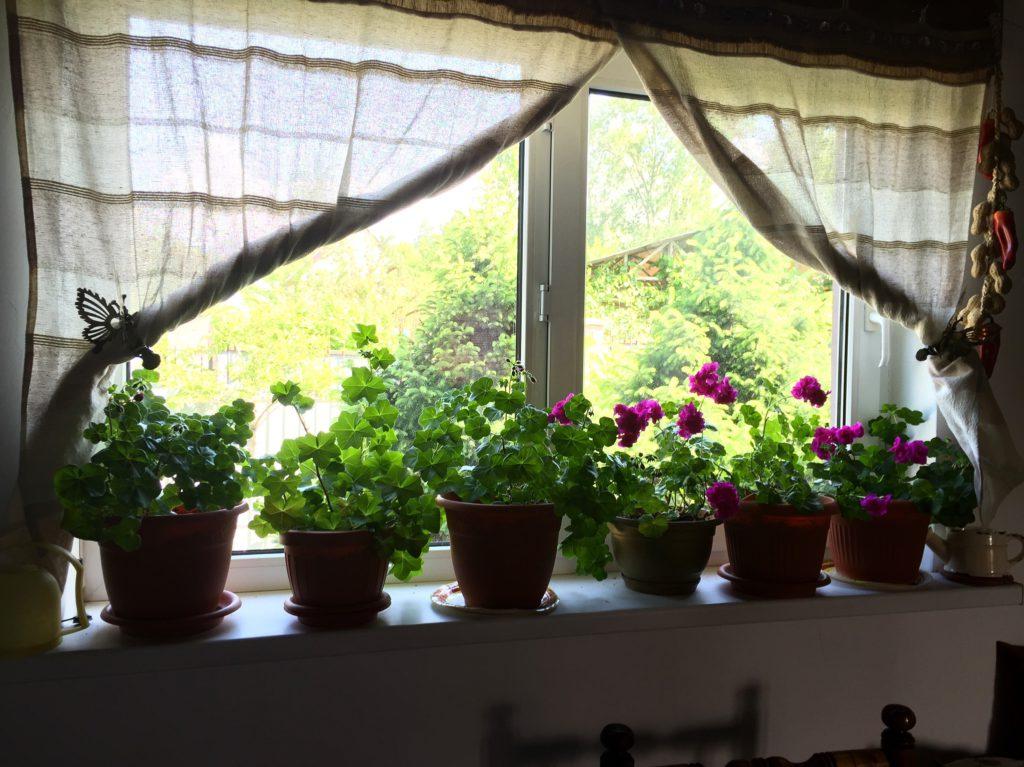 «Аптека» на окне: 5 полезных комнатных растений