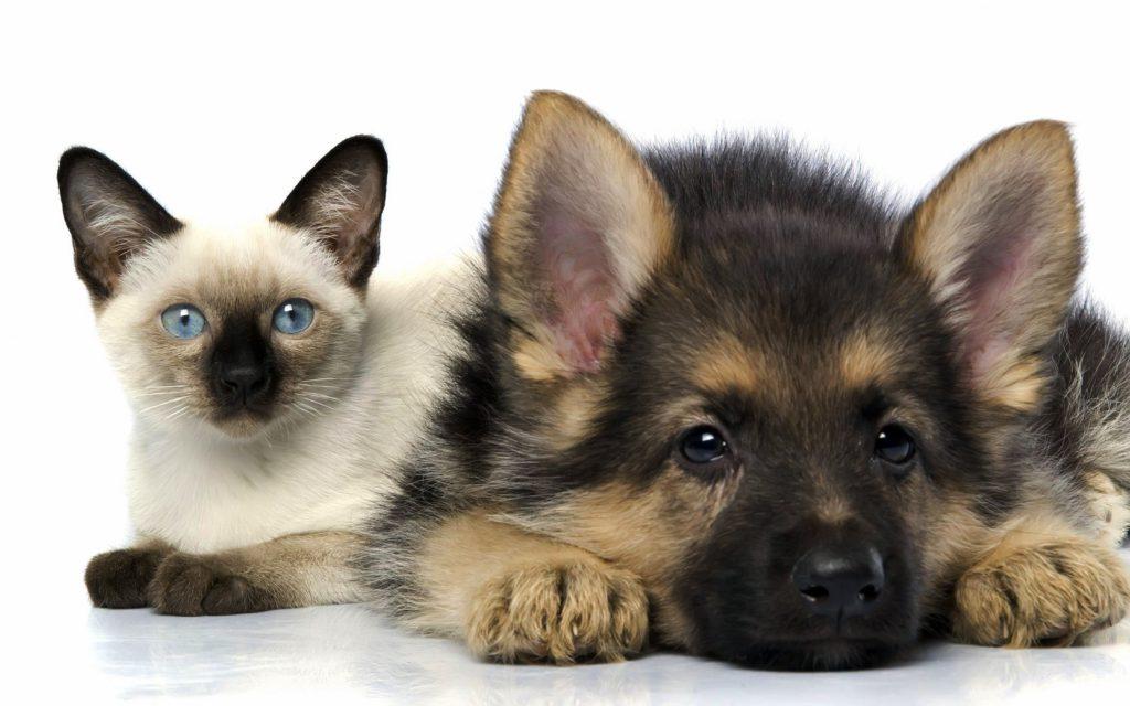 Чем занимается группа помощи бездомным животным «Верный друг»