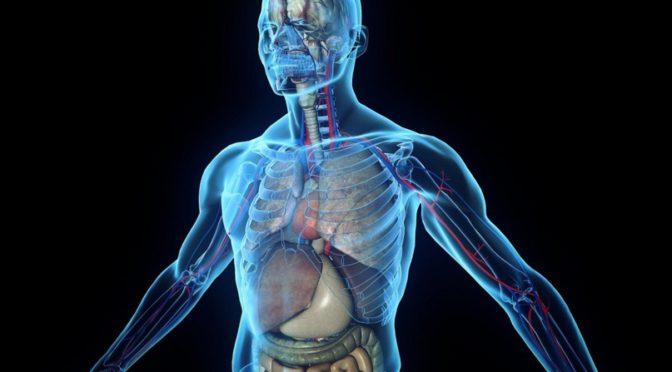 Результаты исследования: Какие органы человека видоизмениться в будущем