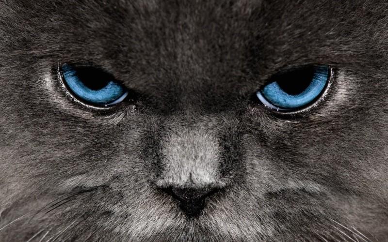 Самые знаменитые служебные кошки
