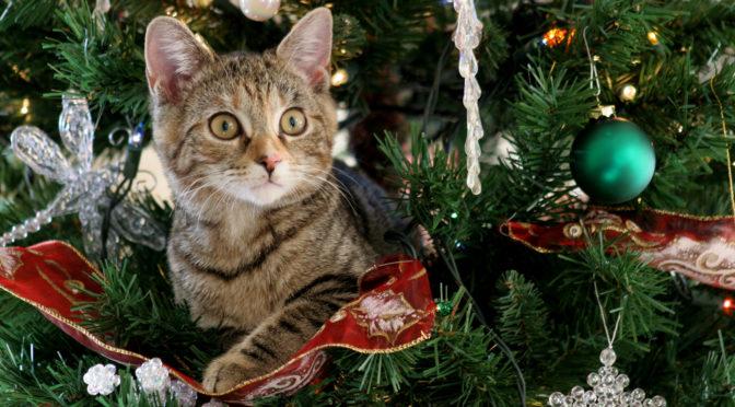 Как планируют провести новогодние выходные жители Кировской области