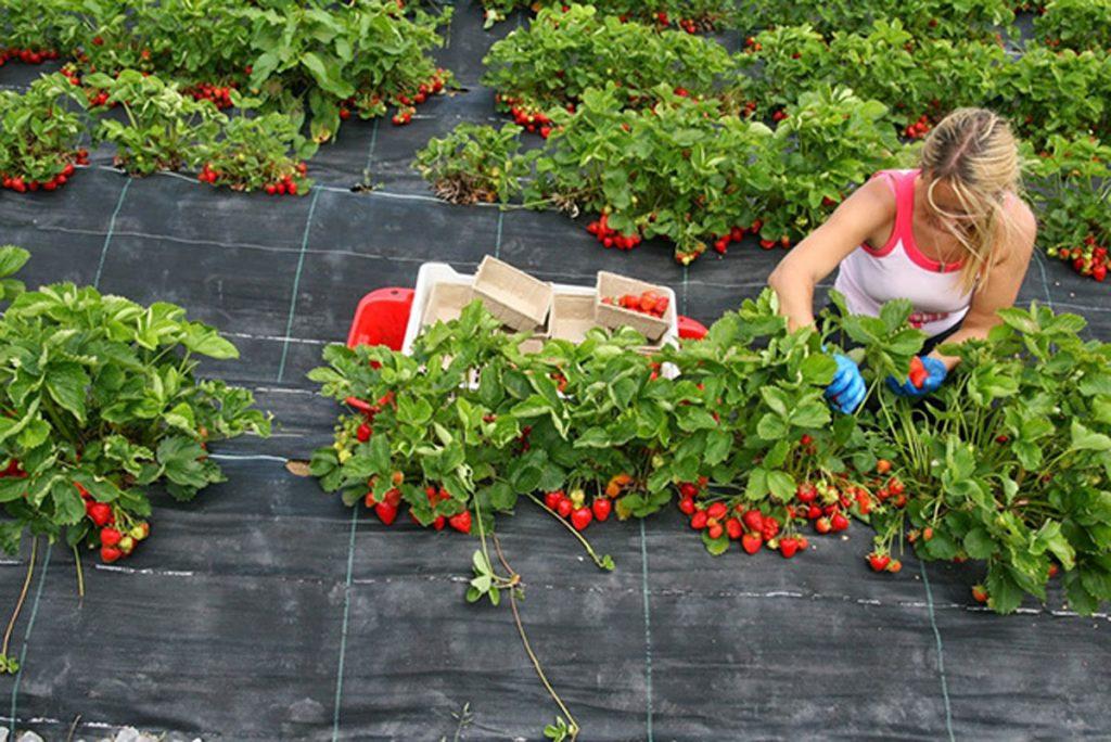 Что нужно знать огородникам, которые хотят купить агротекстиль