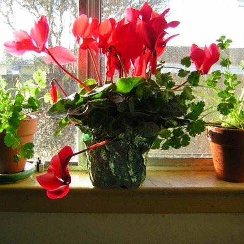 Какие комнатные растения чаще покупают жители Кировской обл.