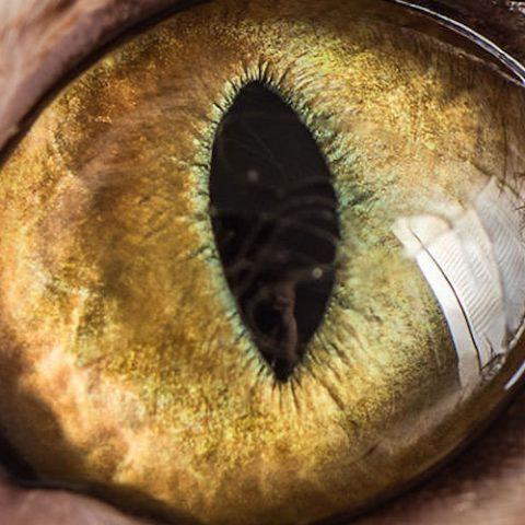 10 интересных фактов о глазах
