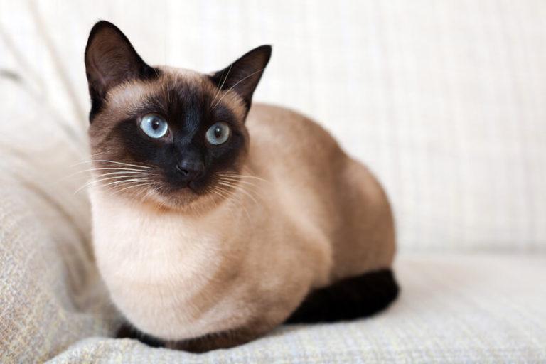 Названы самые популярные породы домашних животных