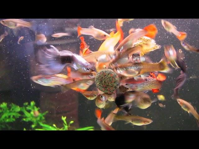 5 общих признаков рыб и людей
