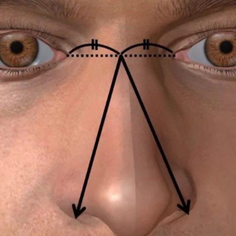 Какая связь между размером мужского хозяйства и размером носа