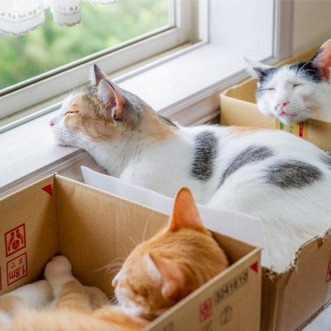 Оказывается, что кошки могут сидеть в своих воображаемых коробках