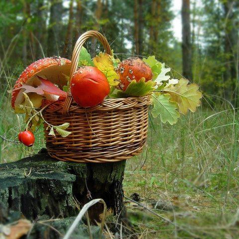 Ужесточили правила сбора грибов и ягод