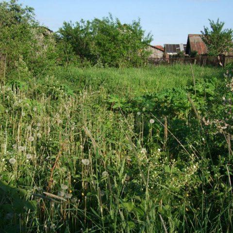 Как увеличить площадь своего участка за счет соседней пустующей земли