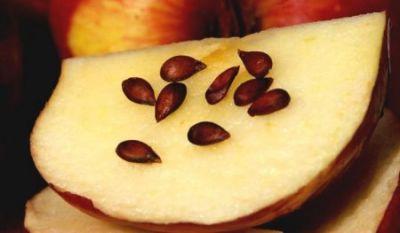 Названы косточки плодов, употребление которых может вызвать смерть