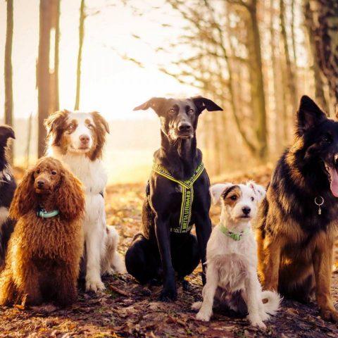 ТОП-10 самых верных пород собак