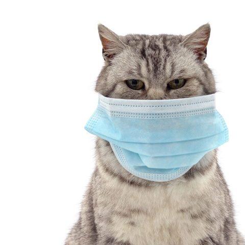 Какие животные восприимчивы к коронавирусу