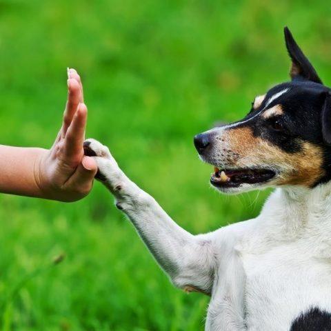 О способности собак понимать жесты человека