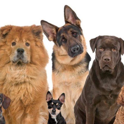 Названы самые умные и самые глупые породы собак