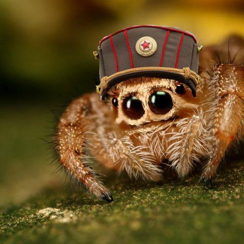 ТОП-3 пауков, которые реально полезны в доме