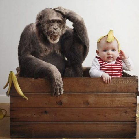 Какое сходство обнаружили ученые между детьми и шимпанзе