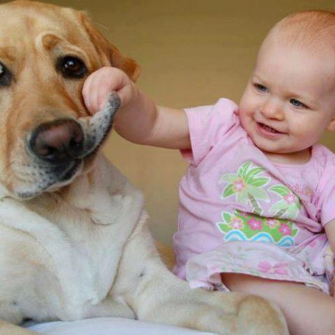 5 пород собак, которые лучше остальных подойдут семьям с детьми