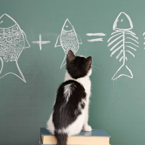 Какие животные обладают математическими способностями