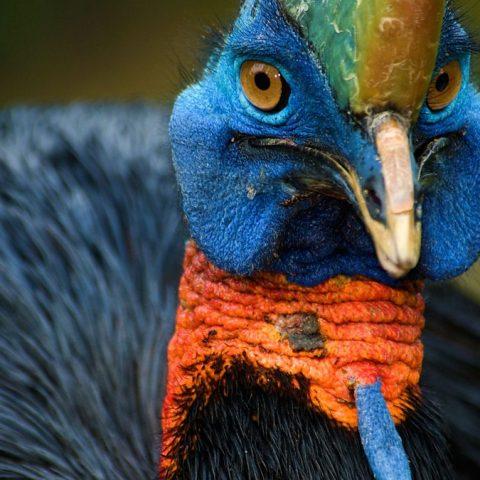 Названа птица, которая была одомашнена первой