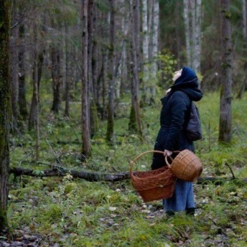 Почему заблудившийся человек начинает кружить по лесу